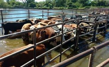 Declararon zona de desastre y emergencia hídrica en Corrientes