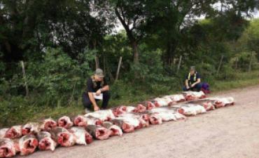 Gendarmería incautó cerca de 700 kilos de surubí en Derqui